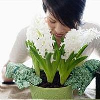 Растения помогут снять стресс